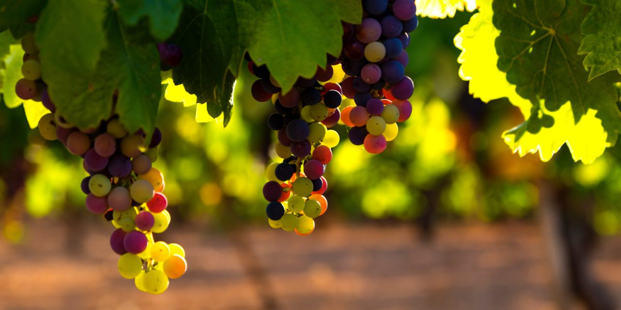 Brandt Grape Cure for Cancer