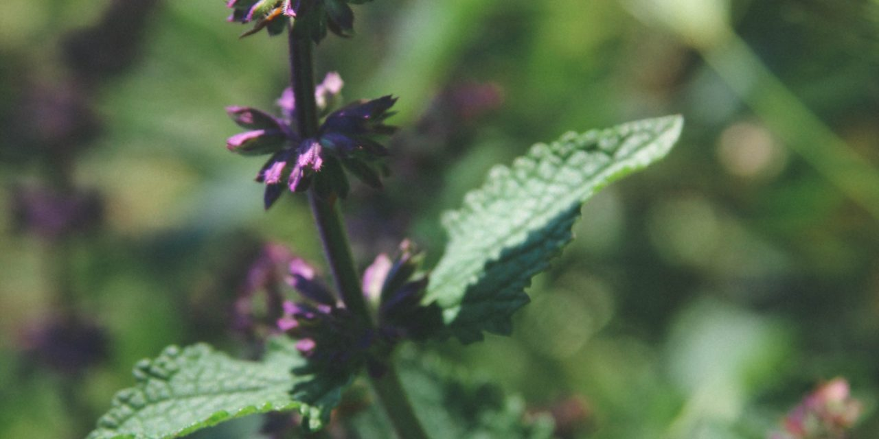 Top 6 Sacred Indigenous Medicines Used to Cure Addiction
