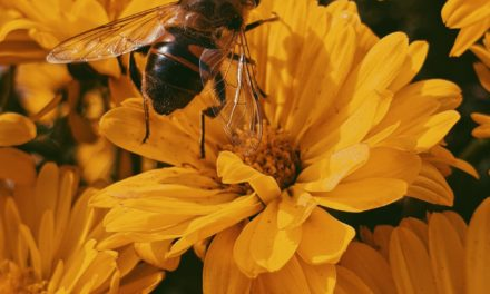 How to Cure Herpes with Propolis and Royal Jelly